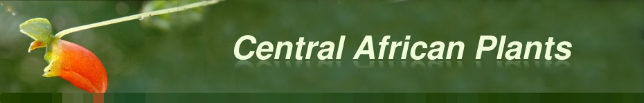 Central African Plants : top banner